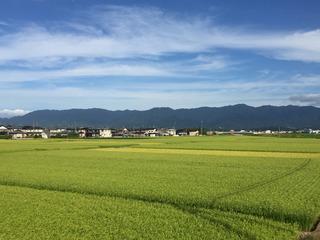 suibara4.jpg
